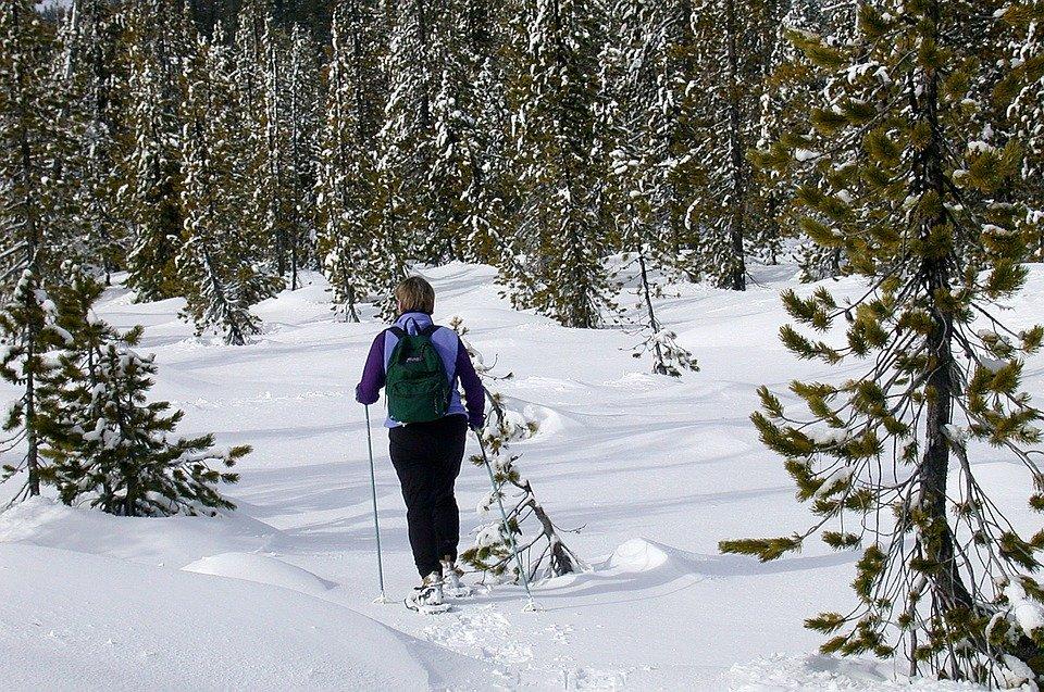 Bežecké lyžování